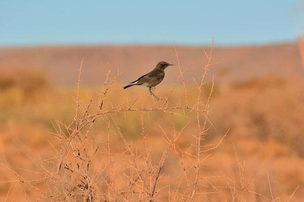 Namibia - Rundfahrt - Reise - Rundreise - Landschaft