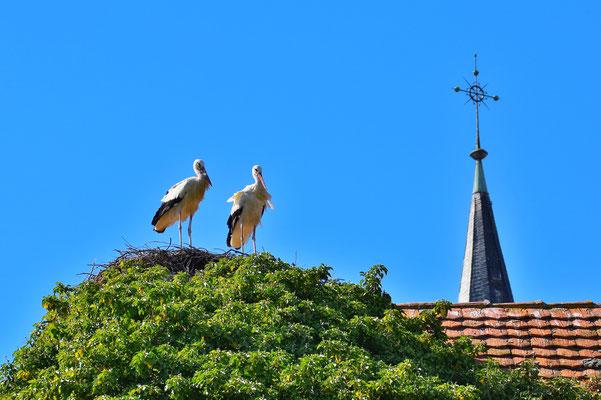 Frankreich, Elsass, Landschaft, Kirchenturm, Storch, Störche
