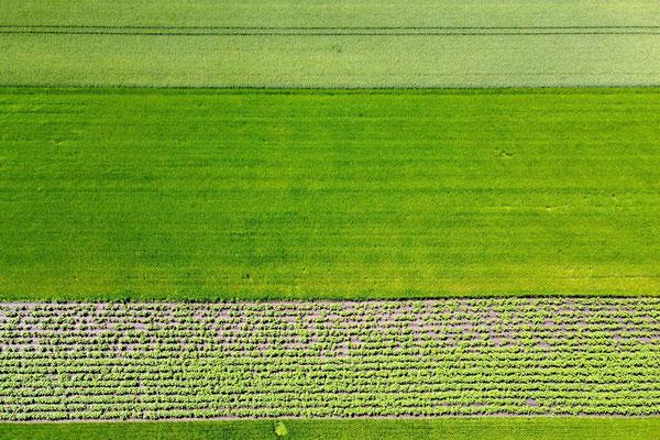 Vogelperspektive, Drohnenfoto, Drohnenbild, Luftaufnahme, Bayern, Feld, Landwirtschaft, Reihen