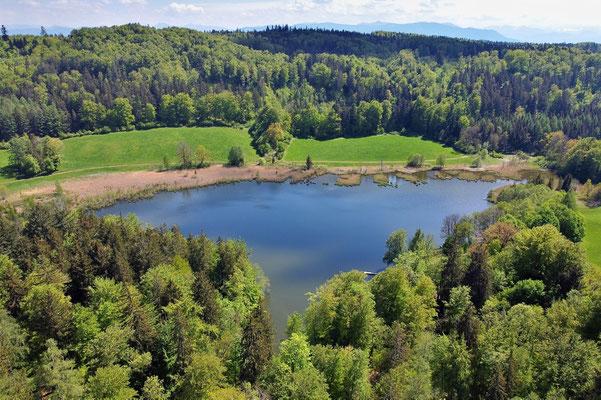 Drohnenfoto - Vogelperspektive - Drohne - Drohnenbild - Luftaufnahme - See - Waldweiher - Dietramszell