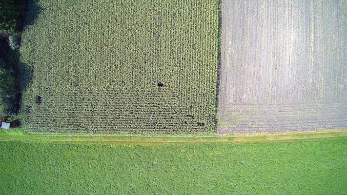 Vogelperspektive, Drohnenfoto, Drohnenbild, Schattenspiel, Luftaufnahme, Bayern, Feld, Grün, Streifen, Bäume, Schatten, Muster, Flecken, Quadrat