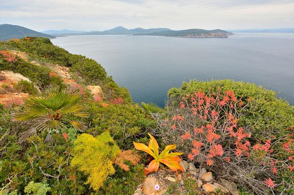 Sardinien, Sardegna, Landschaft, See, Küste, Bucht, Felsen, Rahmen, Porto Torres