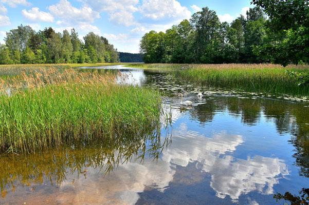Litauen, Rundreise, Landschaft, Wanderung, See, Spiegelung, Aukštaitija National Park