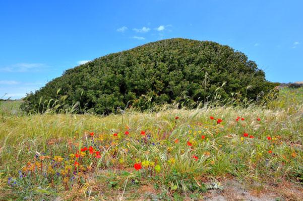 Sardinien, Sardegna, Landschaft, See, Küste, Capo Testa