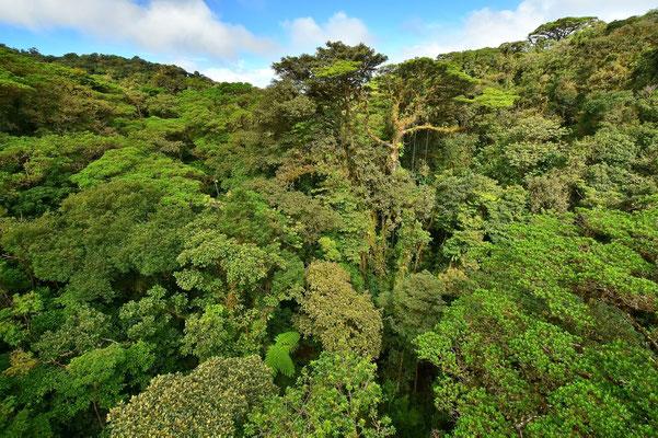 Pura Vida - Costa Rica - Monteverde - Wald