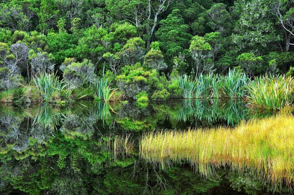 Neuseeland, Südinsel, Spiegelung, See, Caitlins