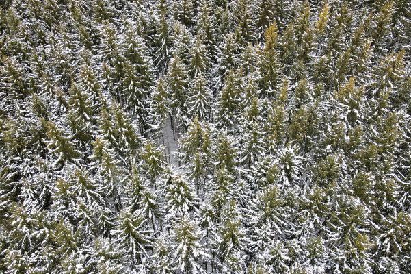 Vogelperspektive, Drohnenfoto, Drohnenbild, Luftaufnahme, Ebersberg, Winter, Schnee, Wald, Bäume