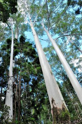 Australien, Australia, Ostaustralien, Ostküste, Queensland, Landschaft, Wald, Wanderung, Fraser Island
