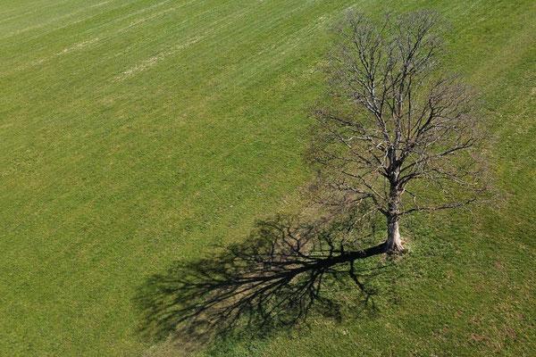 Vogelperspektive, Drohnenfoto, Drohnenbild, Luftaufnahme, Feld, Grün, Braun, Parzellen, Streifen, Flecken, Sommer, Acker, Baum