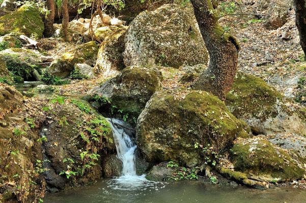 Griechenland, Rhodos, Petaloudes, der Tal der Schmetterlinge