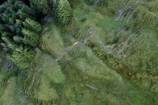 Vogelperspektive, Drohnenfoto, Drohnenbild, Luftaufnahme, Bäume, Wald von oben, Gindelalmschneid, grüne Vegetation