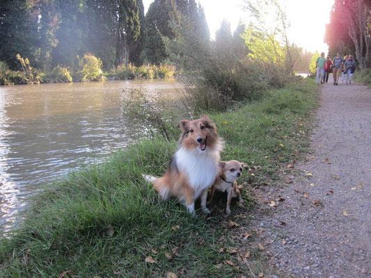chien de petite taille