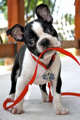 quel petit chien choisir