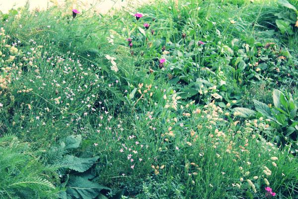 Tapis de fleurs sauvages