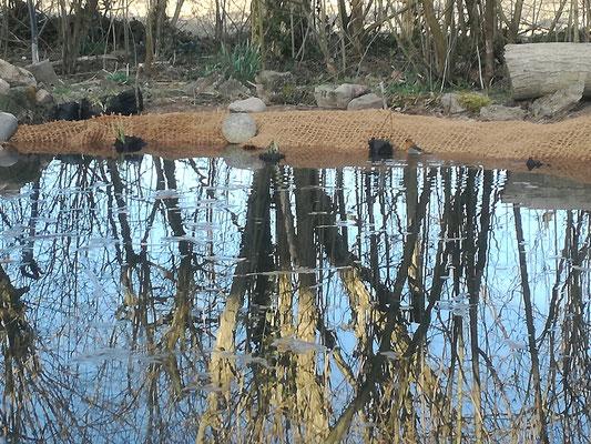 Teich mit Böschungs-Matten für Uferbewuchs, Teichpflanzen.