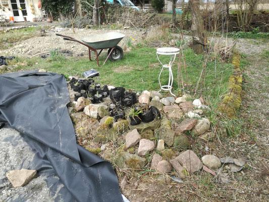 Wasserpflanzen, die vorher und dann bei steigendem Wasserstand eingebaut werden.