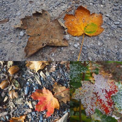 Oktober – der Herbst wird bunt