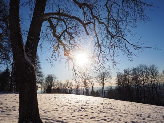 Februar Schnee im am Üetliberg