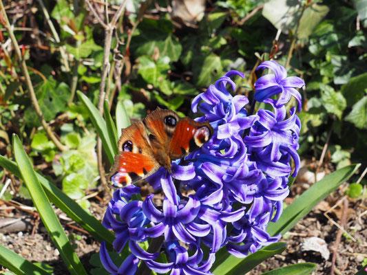 Schmetterling Botanischer Garten
