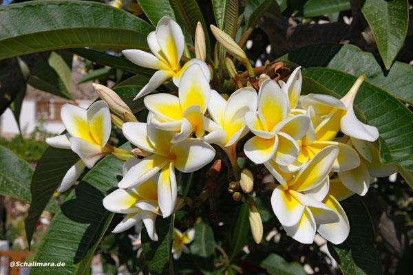 von Blüten