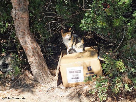Katzennachwuchs im Karton