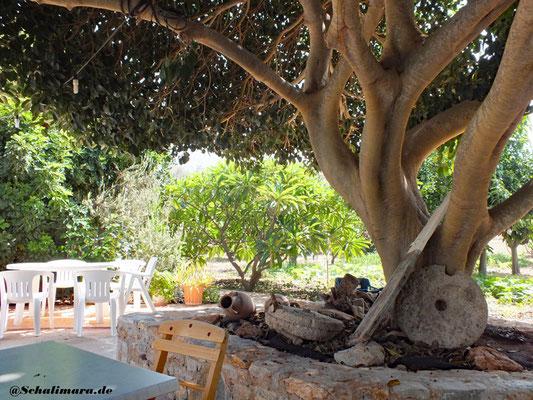 Gemütlich unter schattigen Bäumen