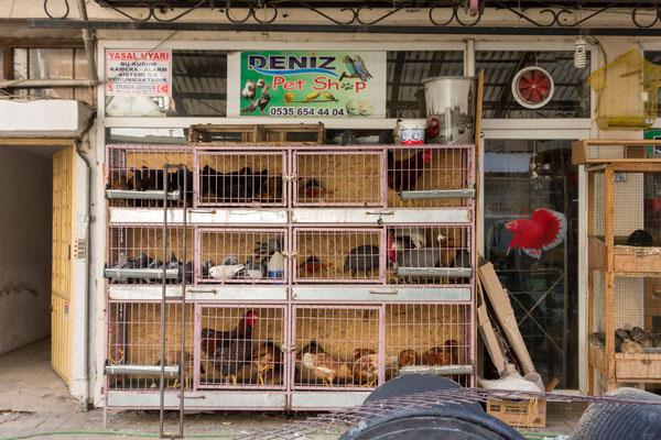 Tierhandlung in Manavgat