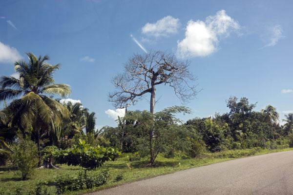 Landschaft im Vorbeifahren...,Belize