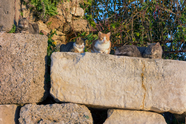 Katzen sind sind überall zu sehen
