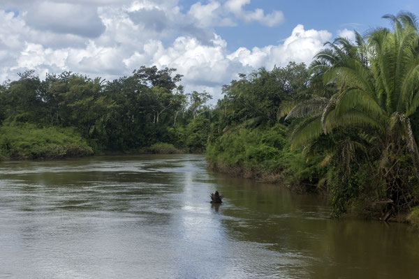 Tropischer Wald, Belize