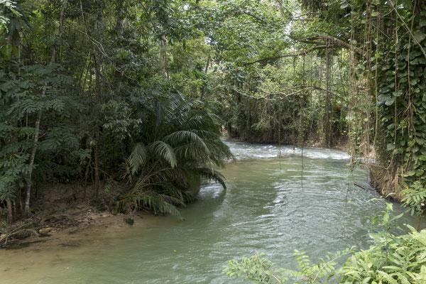 Waldgebiet Trelawny, Jamaica