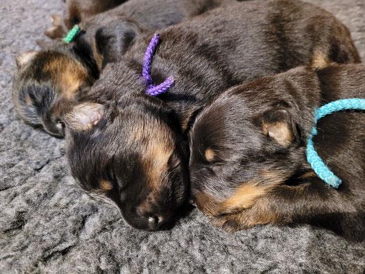 die Kleinen schlafen noch sehr viel