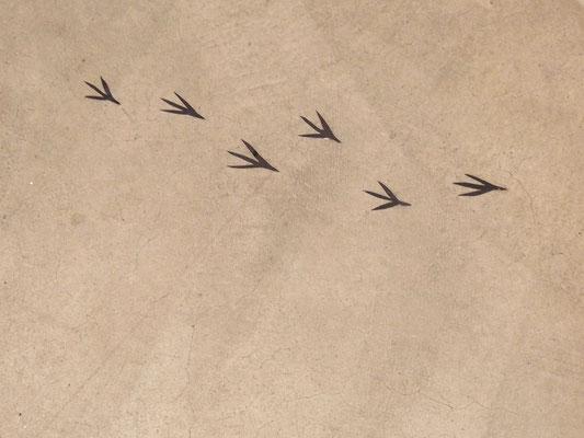 鳥の足跡!(恵さん作)