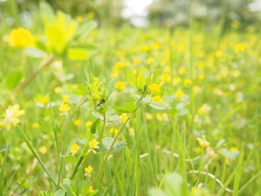 これは春ですね。お、蟻がいたっ。