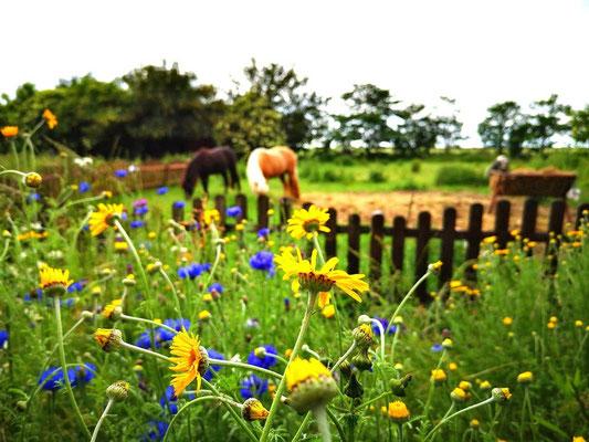 Unsere Blumenwiese für die Bienen