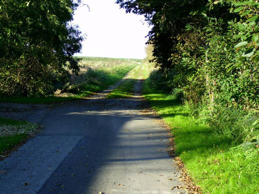 Der Weg vom Hof zum Deich