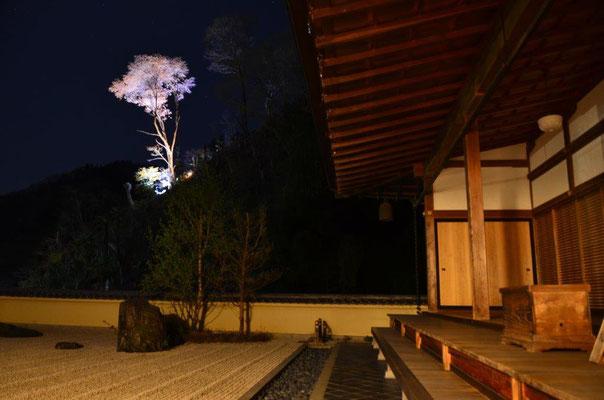 石庭に浮かぶ夜桜