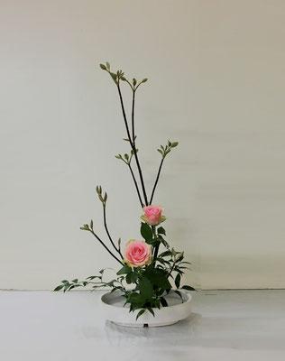 <虫狩 バラ 笹葉ルスカス> Akikoさんの作品です。