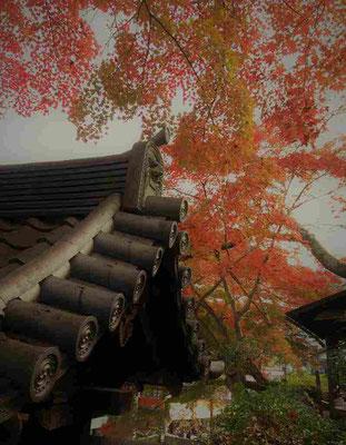 善福寺。秀吉が千利休に命じて作らせたという茶釜が残されているという。ここで太閤の茶会が開かれていたのか?