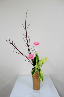 2020.12.9 <珊瑚水木 ガーベラ 青ドラセナ> Katsurakoさんの作品です。瓶花、頑張っています!