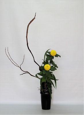 2020.11.24 <石化柳 ピンポン菊 著莪> Tamikoさんの作品です。