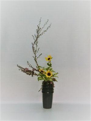 5/23 <ギョリュウバイ 向日葵 ゴッドセフィアナ> Tamikoさんの作品です。
