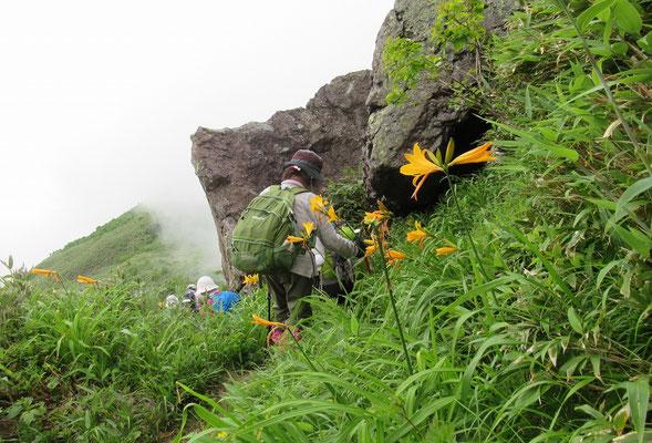 2020.7.16 ニトヌプリの頂上直下の登山道脇にはエゾカンゾウが咲き乱れる。岩の右側からは上昇気流に乗って雲が流れてきている。