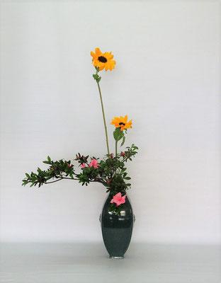 2021.6.8 <向日葵(ヒマワリ) 皐月(サツキ)> イメージの上では花の季節が少しずれているようなツツジとヒマワリですが、この種のツツジは春に咲くツツジより一月以上遅れて(旧暦の皐月)開花するようです。Tamikoさんの作品です。