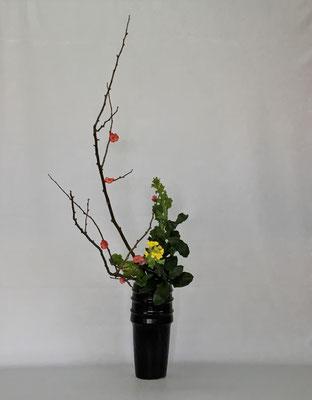 <木瓜 菜の花 丸葉ルスカス> Atsukoさんの作品です。