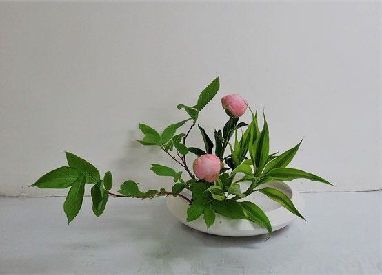 2020.6.24 <大葉ハゼ 芍薬(シャクヤク) ドラセナサンデリアーナ> Katsurakoさんの作品です。シャクヤクの優雅さを生かして傾斜型のお稽古です。