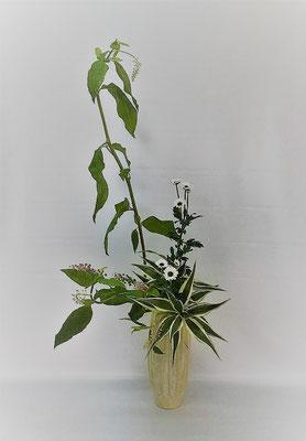 <洋種山牛蒡(ヨウシュヤマゴボウ) 小菊 ドラセナ・サンデリアーナ> Kazukoさんの作品です。