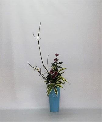 2021.1.26 <梅 菊 ドラセナサンデリアーナ> Tamikoさんの作品です。
