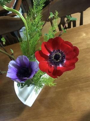 「アネモネ」Natsumiさんが送付してくれた写真です。