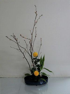 2020.1.22 <桜(サクラ)ピンポン菊 ドラセナサンデリアーナ> Ittuちゃんの作品です。小判型花器にたてるかたちです。